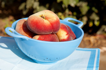 fresh peaches in blue colander