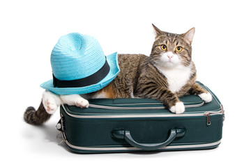 Cat, suitcase and hat