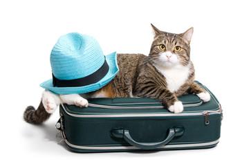 Cat, suitcase and hat