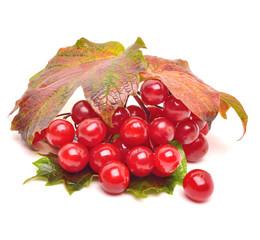 Red viburnum berries with leaves