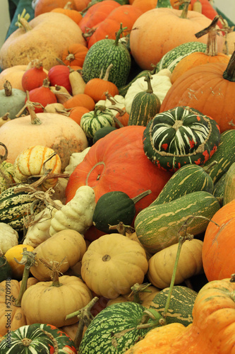 Squashes on Show