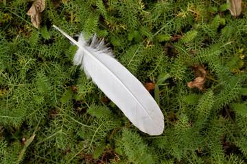 penna di uccello nel sottobosco