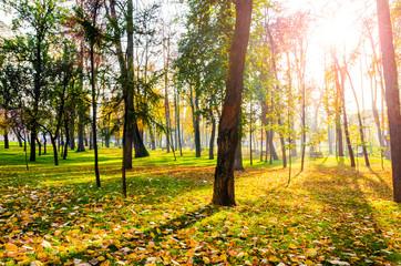 Sun threw trees