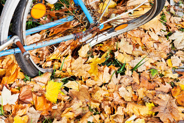damaged wheel of bicycle in autumn leaves