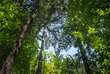 Der Wald im Gegenlicht (Ameisenperspektive)