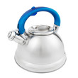 stainless tea kettle with whistle isolated on white background