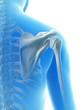rendered illustration of the shoulder joint