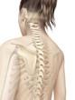 female spine anatomy