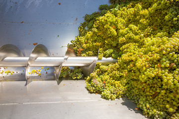chardonnay corkscrew crusher destemmer in winemaking