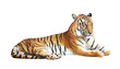 Tiger with clipping path on white background