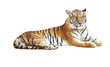 Tiger looking camera with clipping path on white background - 57724593