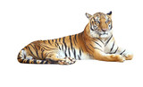 Tiger looking camera with clipping path on white background - Fine Art prints