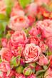 Englische Rosen, Schnittblumen, Blumenmarkt, Floristik
