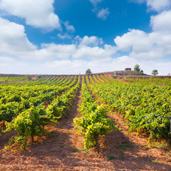 Mediterranean vineyards in Utiel Requena at Spain