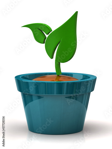 Green plant in blue pot
