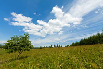 beautiful grassland landscape in summer