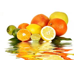 Zitrusfrüchte auf weiß mit Spiegelung