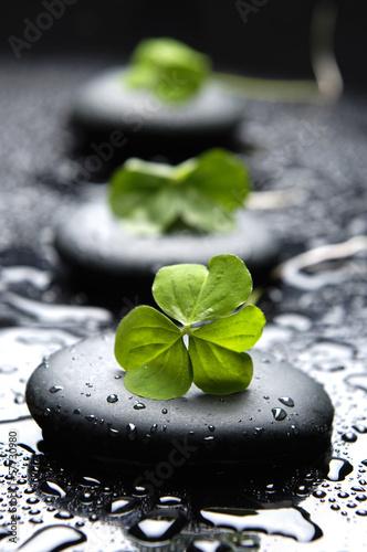 wet-zen-kamienie-z-wiosna-zielony-lisc