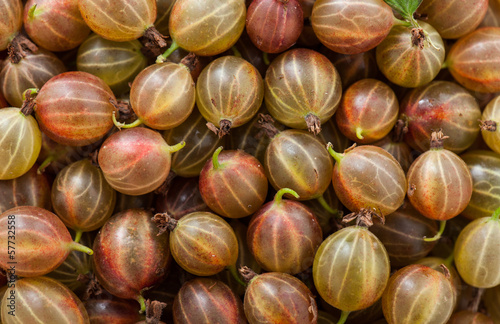 Gooseberries backgrounds