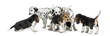 Group of Dalmatian and Beagle puppies eating all together