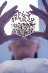 Low angle view of researcher analyzing sprouts in petri dish