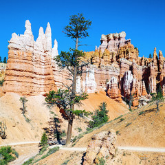 Hoodoo rock spires of Bryce Canyon