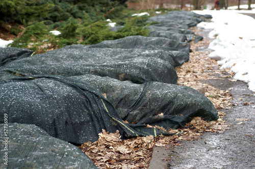 Cover plants for winter - 57736909