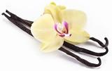 Fototapety Vanilla sticks with a flower.