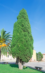 cypress in the square
