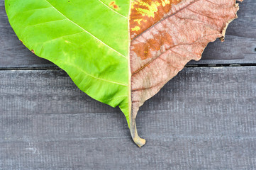 leaf on wood background