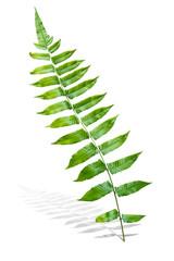 Branch of Green Fern Leaf