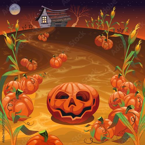 Pumpkins in the field.