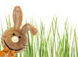 Osterhase vor grünem Gras mit Textfreiraum