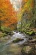 Galbena canyon autumn