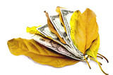 Four Dollar Bills Between Autumn Leaves