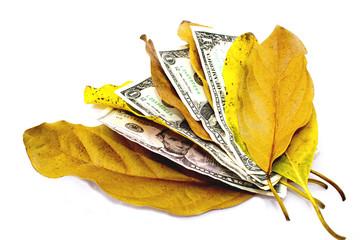 Four Dollar Bills Between Autumn Leaves