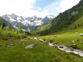 Berglandschaft mit Wildbach und Grauvieh