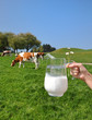 Jug of milk against herd of cows. Emmental region, Switzerland