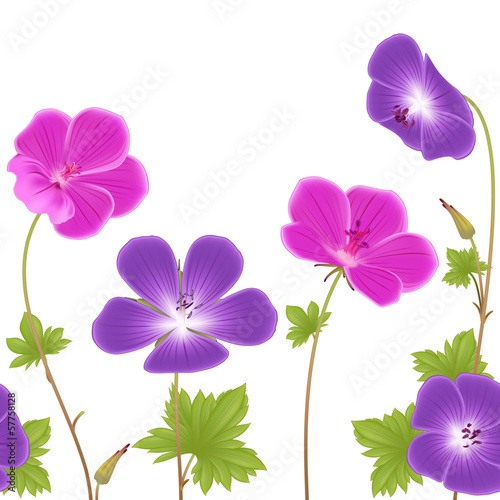Pink and purple geranium flowers repeating pattern