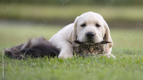 dog and kitten © okeanaslt
