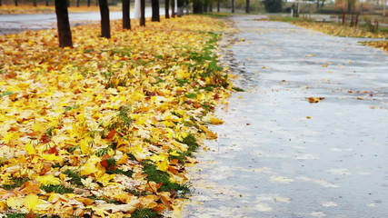 Big puddle on autumnal alley with yellow foliage and cold Rain