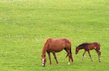 草原と馬の親子