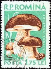 Cep (Boletus edulis) (Romania 1958)