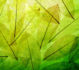 Green leaves vintage background - 57769319