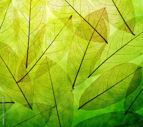 Obraz na Plexi Green leaves vintage background