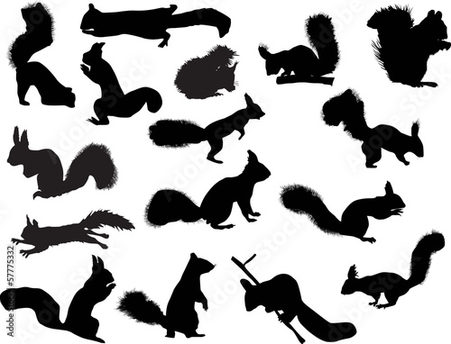 sixteen squirrels isolated on white