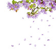 lilac flower tree branches and falling petals