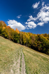 Autumn forest and path in the meadow with blue cloudy sky