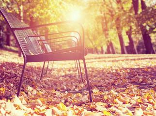 soft light park autumn