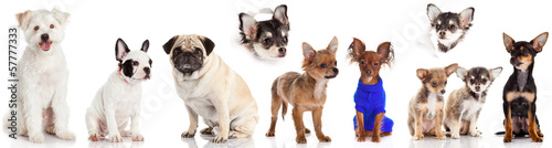 Group of puppies on a white background. Group of dogs